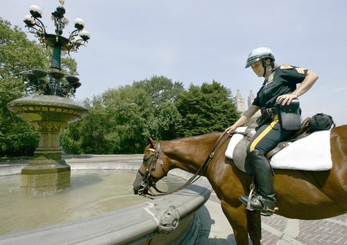 horse-leader.jpe